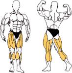Jaké svaly posilujeme pomocí rotopedu