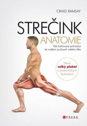 strecink anatomie.jpg