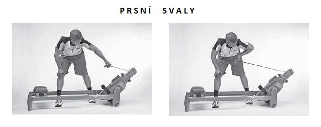 veslo-prsni-svaly