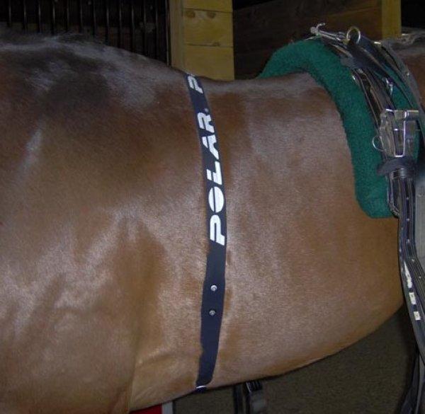 POLAR popruh pro koně
