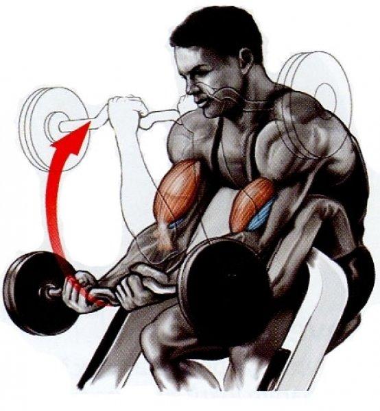Stroj na Biceps izolovaný